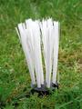 Plifix Grass Tufts White Sample